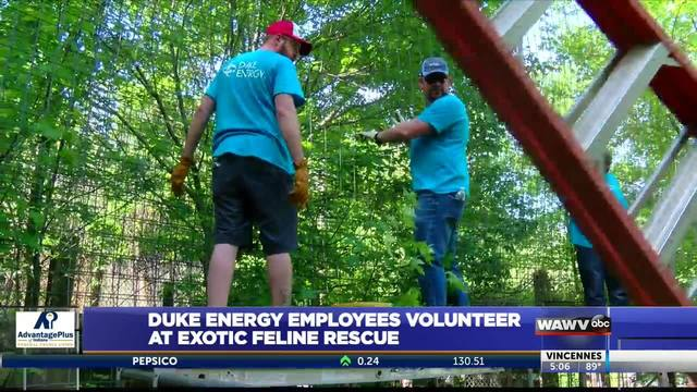 Duke Energy volunteers at big cat rescue center